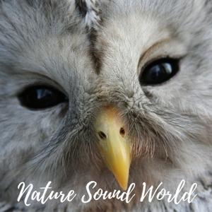Nature Sound World by Nature Sound World
