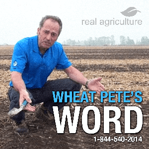 Wheat Pete's Word by RealAgriculture