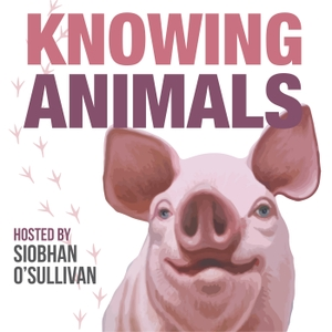 Knowing Animals by Siobhan O'Sullivan