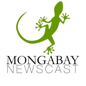Mongabay Newscast by Mongabay.com