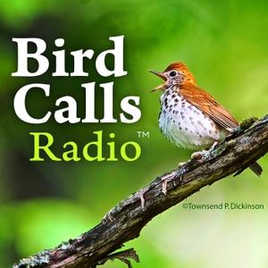 BirdCallsRadio by BirdCallsRadio