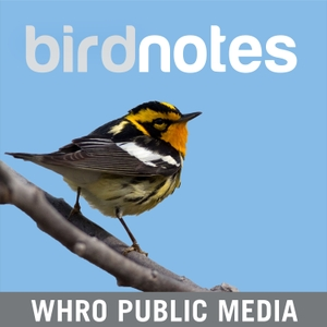 Bird Notes by WHRO