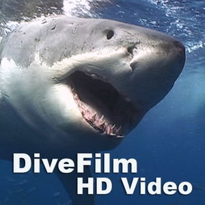 DiveFilm HD Video by DiveFilm