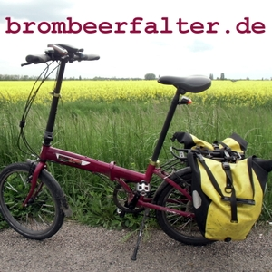 Brombeerfalter by Daniel Biallas