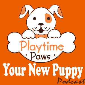 Your New Puppy: Dog Training and Dog Behavior Lessons to Help You Turn Your New Puppy into a Well-Behaved Dog by Debbie Cilento: Dog Trainer | Dog Behavior Consultant | Owner of Playtime Paws | Belly Rub Specialist