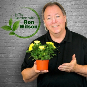 In The Garden with Ron Wilson by 55KRC (WKRC-AM)