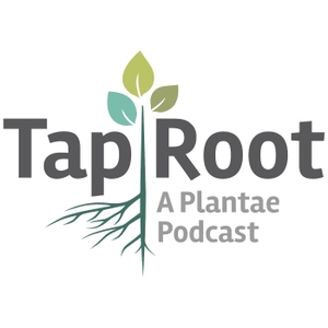 The Taproot by Plantae / American Society of Plant Biologists