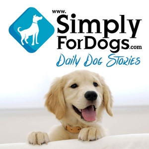 Simply For Dogs|Franklin Medina discusses the latest dog tips,  dog strategies, dog training,  and everything related to dogs by Franklin Medina/Author/Blogger/Marketer