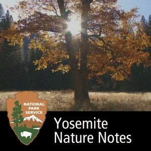 Yosemite Nature Notes by None