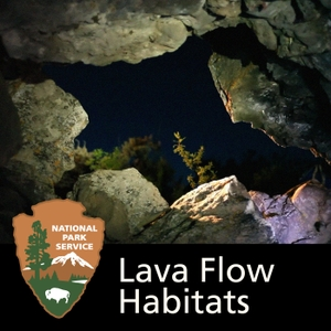 Lava Flow Habitats: The Wildlife and Geology of Craters of the Moon National Park 2
