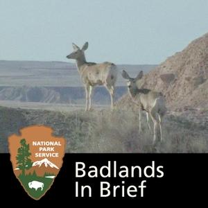 Badlands in Brief by None