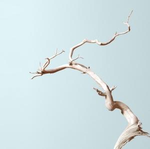 Bonsai Mirai: Asymmetry by Bonsai Mirai
