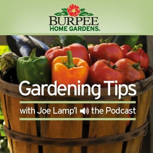 Burpee Home Gardens Tip of The Week Podcast by Joe Lamp'l