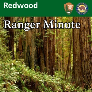 Redwood Ranger Minute by Redwood National and State Parks