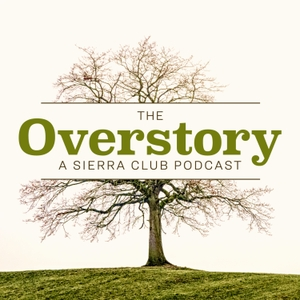 The Overstory by Sierra Club