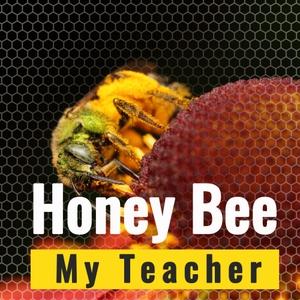 Honey Bee My Teacher by Patti Haines