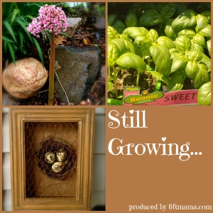 Still Growing...A Weekly Gardening Podcast by Jennifer Ebeling: 6ftmama, Master Gardener, & Blogger