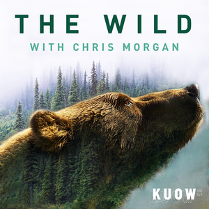 The Wild with Chris Morgan by KUOW News and Information
