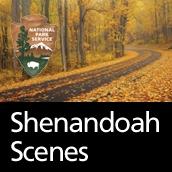 Shenandoah Scenes by Shenandoah National Park