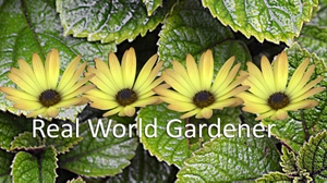Real World Gardener Podcasts by Marianne Cannon