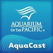Aquarium of the Pacific AquaCast by Aquarium of the Pacific