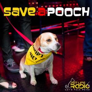 Save A Pooch - Rescue Dog Welfare on Pet Life Radio (PetLifeRadio.com) by Beverly Isla