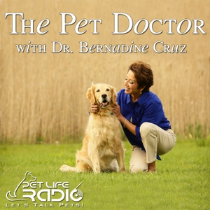 The Pet Doctor - Keeping your pets healthy & pet wellness - Pets & Animals on Pet Life Radio (PetLifeRadio.com) by Dr. Bernadine Cruz